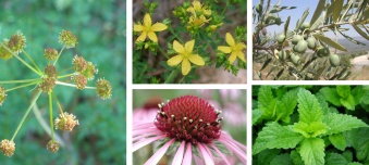 virattack compound plants
