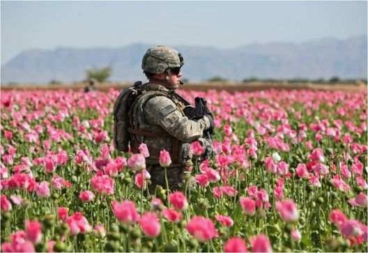 gaurding the poppy fields.